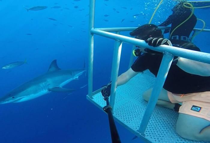 NitroxMaker™ Brownie's Third Lung - Sharkwater - Sharks