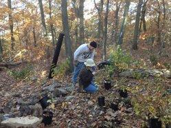 Volunteer Leadership. Laurie Verbeke shows Vince the proper way to prepare a shrub.