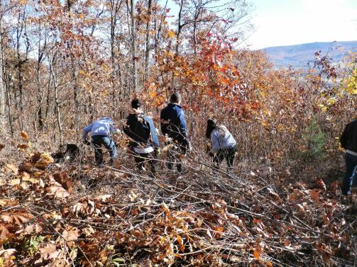 Lion Ambassadors clearing the view at the Station 7, Flat Rock Overlook.