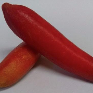 幻の柑橘 フィンガーライム輸入販売はじめました