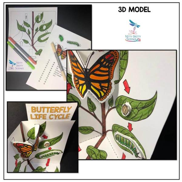 Butterfly Life Cycle Preview 2 - Butterfly Life Cycle Model - 3D Model