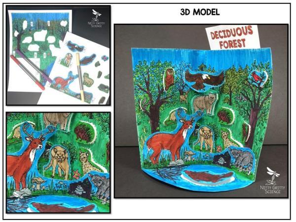 Deciduous Preview 1 - Deciduous Forest Biome Model - 3D Model - Biome Project