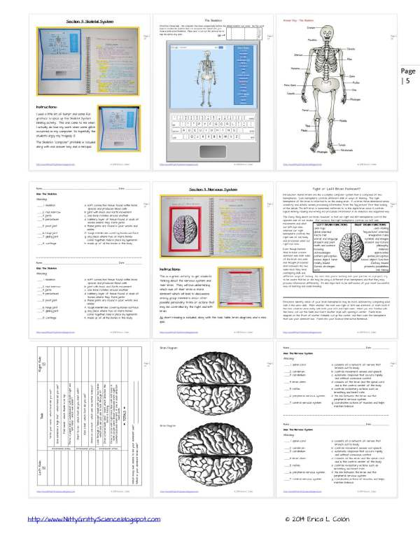 Demo HUMAN BODY Part 1 Page 5 - Human Body – Part 1
