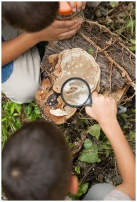 Picture2 - Outdoor Explorer – Science and Nature Activities for Elementary Students