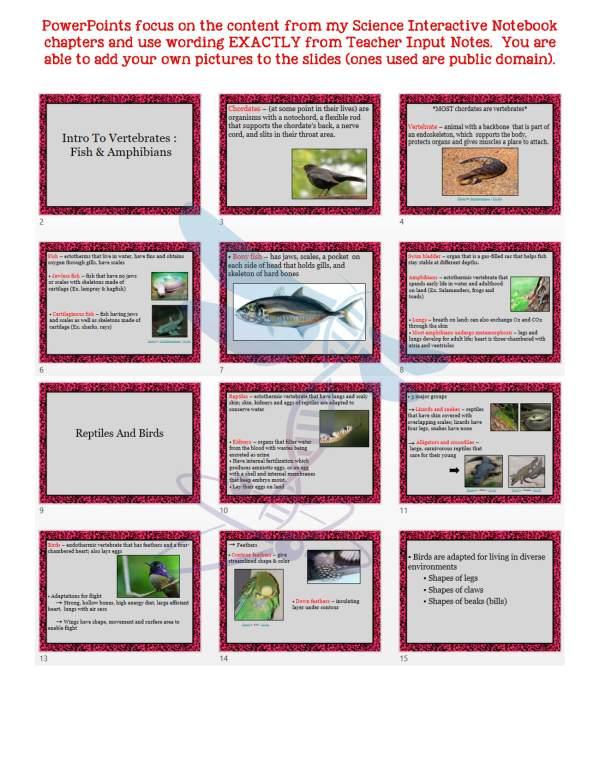 demoLifeScienceNotesPowerPointTestAnimalDiversityVertebratesEDITABLE2398467.pdf Page 5 - Animal Diversity: Vertebrates Life Science Notes, PowerPoint & Test~ EDITABLE