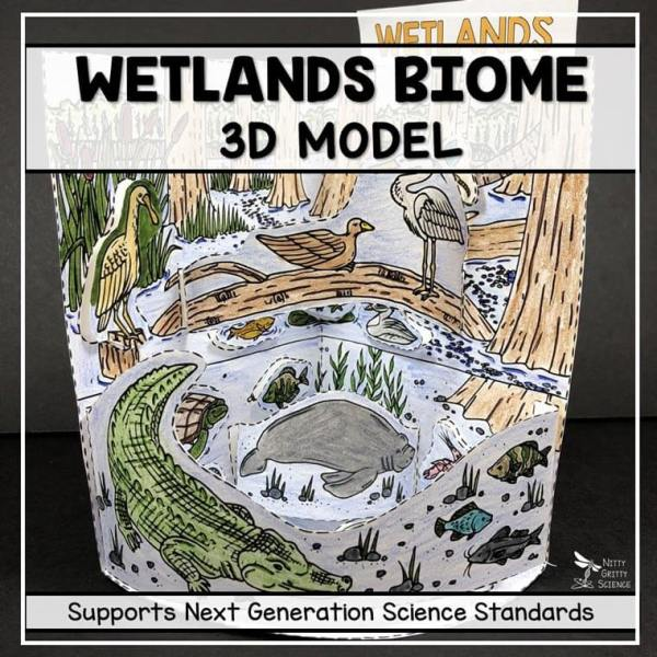 wetland biome model 3d model biome project featured image - Wetland Biome Model - 3D Model - Biome Project
