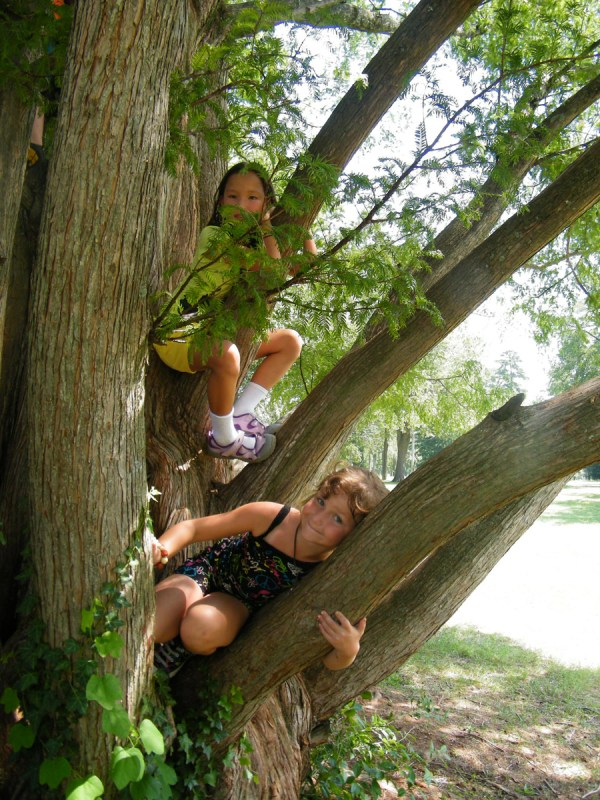 c2011-treeyogis