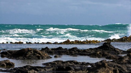 Curio Bay, The Catlins