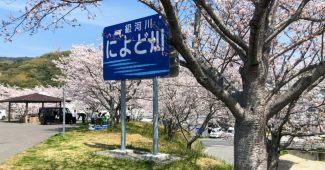 仁淀川桜堤公園
