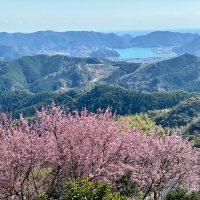 雪割桜(高知県須崎市) ⇒ 桑田山から蟠蛇森まで10kmハイキング