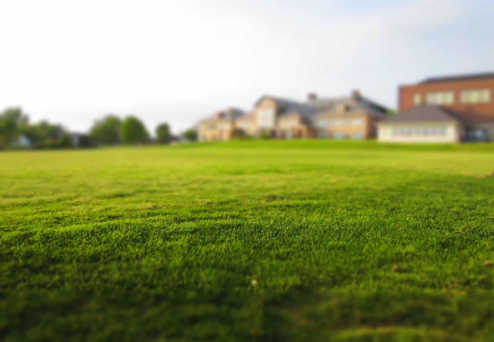 grass meadow estate