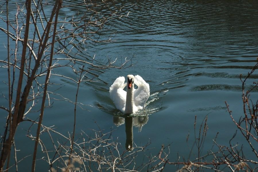 Morris Drakesville Condos Exterior Swans
