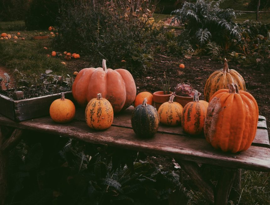 Over/Under: Spooky Season