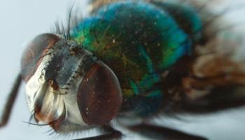 Maggots infesting Green Carts in Charlottetown – NJN Network