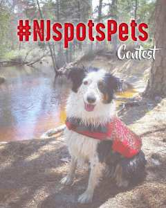 #NJspotsPets Contest – May 2017