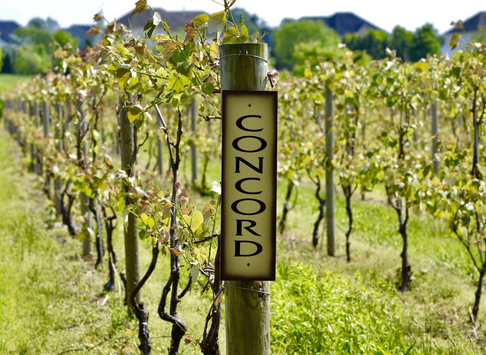 Top 4 New Jersey Vineyards To Visit This Spring