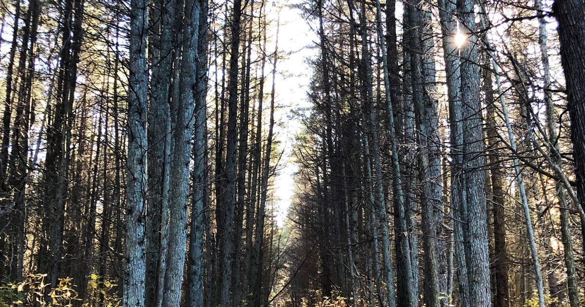 Local Guide: The Pine Barrens – No Jersey Devil Required!