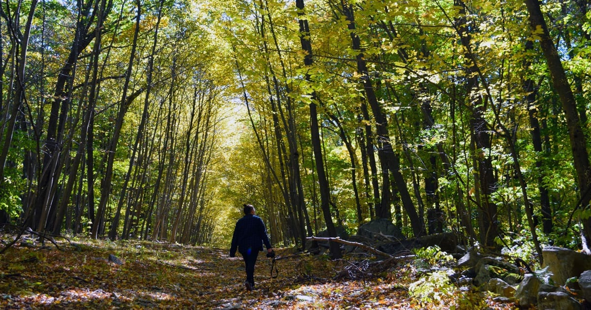9 Best Fall Foliage Hikes in New Jersey