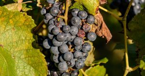Read more about the article Sip Your Worries Away at this Sustainable South Jersey Winery