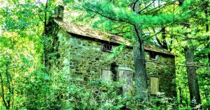 Discover Miquin Woods in Hunterdon County