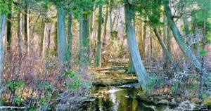 Visiting Ocean County's Wells Mills County Park