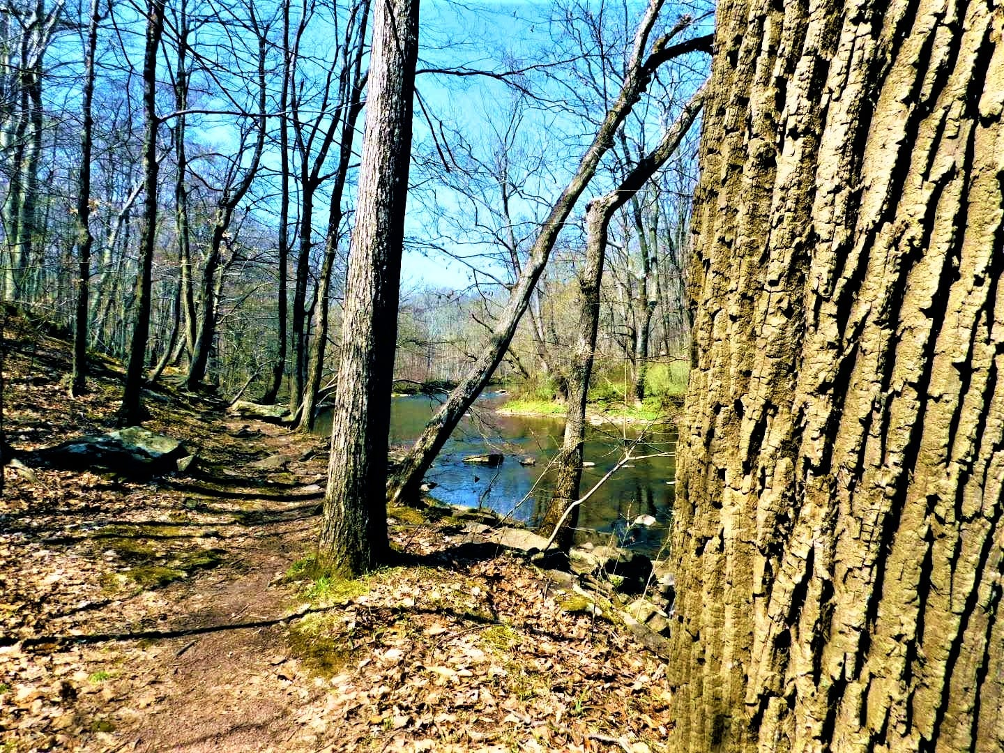 Read more about the article Exploring Laurie Chauncey Nature Trail Near Princeton