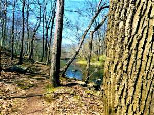 Exploring Laurie Chauncey Nature Trail Near Princeton