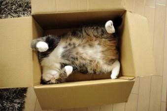 macaka kutija