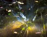 Sun spots on water - Myakka