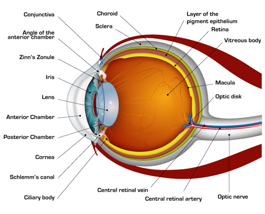 Short Notes And Important Questions On Human Eye School