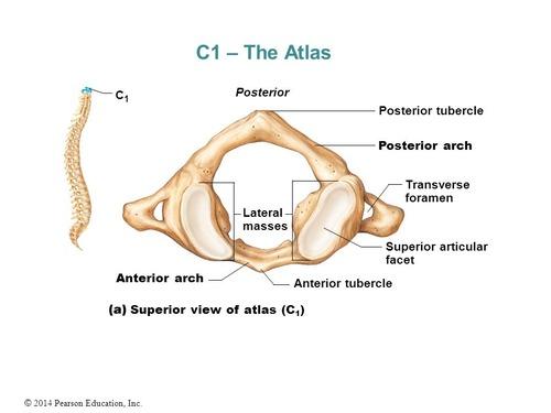 Specimen A Cervical Image