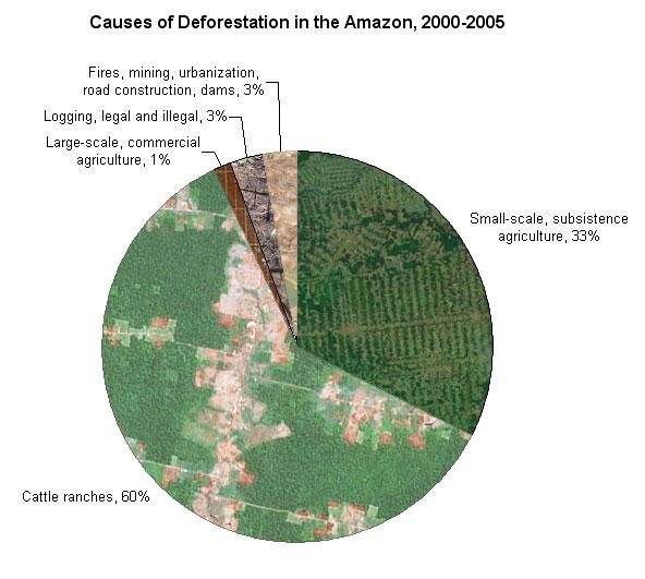 Deforestation (5/6)
