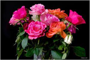 #f7d, kleurig, fleurig, bloemen, rozen