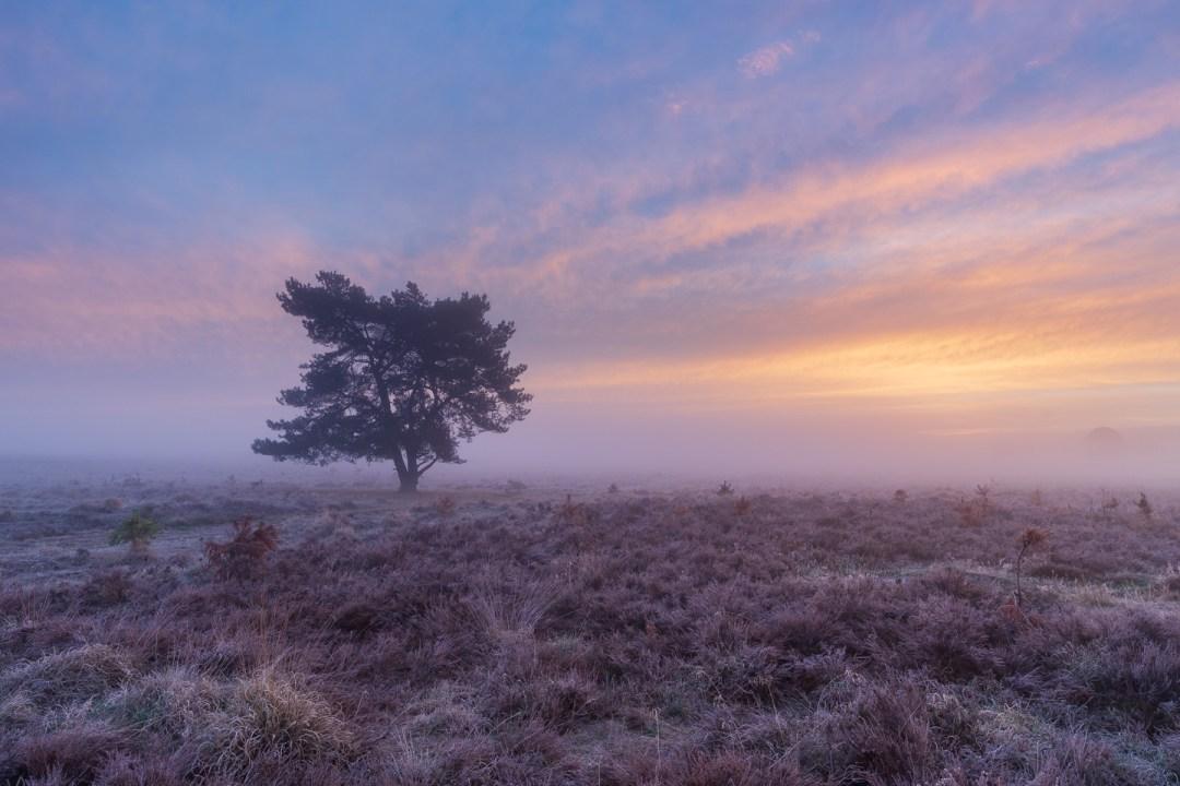 Terletse heide, Roosendaalse veld, Herfst, Oktober, nldazuu fotografeert, autumn, fall, herfst