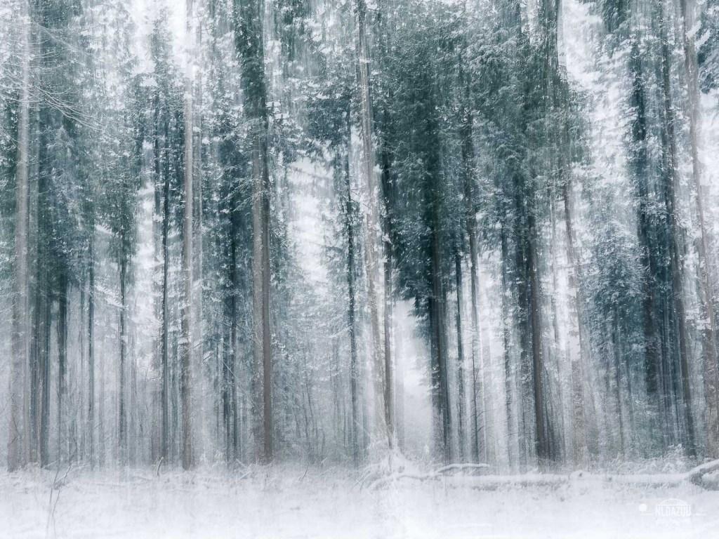 perspectief bomen