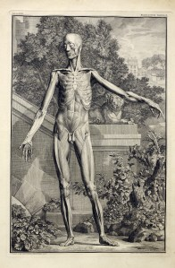 a figure displaying the surface musculature of the front of the bodystands akimbo in front of a landscape of plants, and a stone wall and lion statue