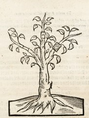 A tree with several grafted branches.