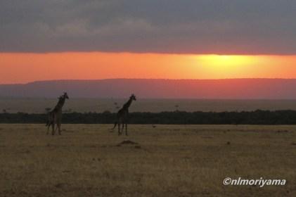 maasai-giraffe-sunset-3