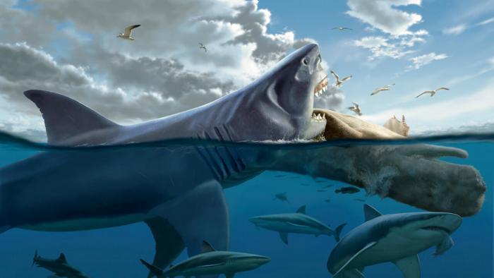 Әлемдегі 10 үлкен акулалар (14 сурет)
