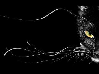 blackcat0001