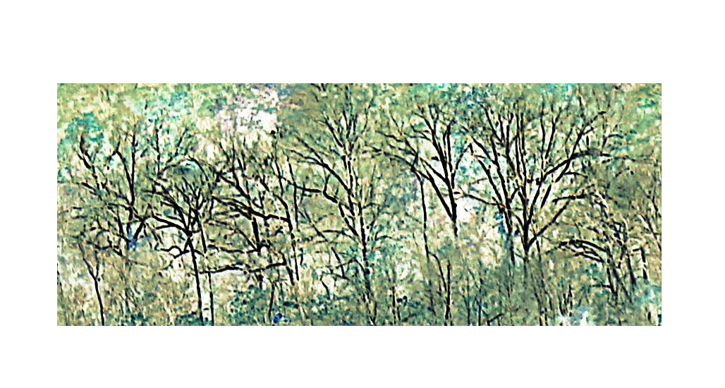 Chain bridge palisades trees turquoise gall feature
