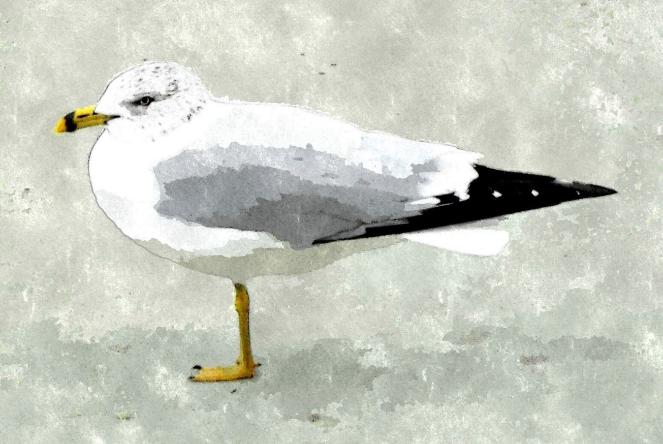 Sketch seagull 1 leg gall ret best