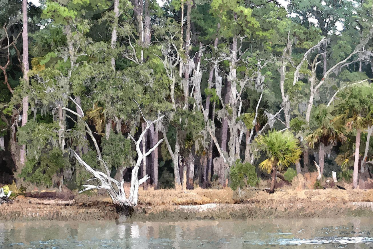 Sketched swamp trees 1
