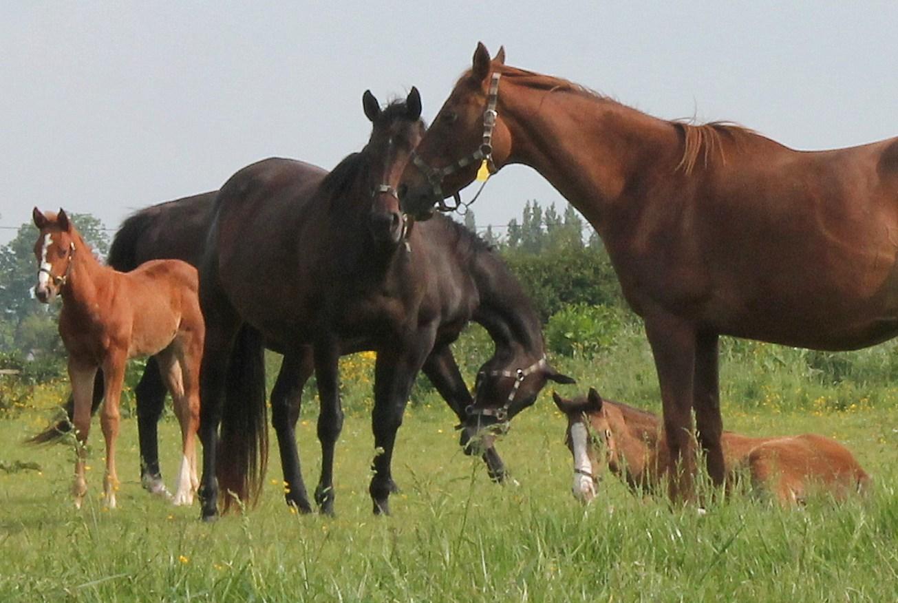Varaville, France best horses