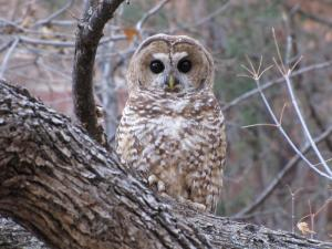 Read more about the article Owl lawsuit now adversely affecting hundreds of Jobs, millions of dollars