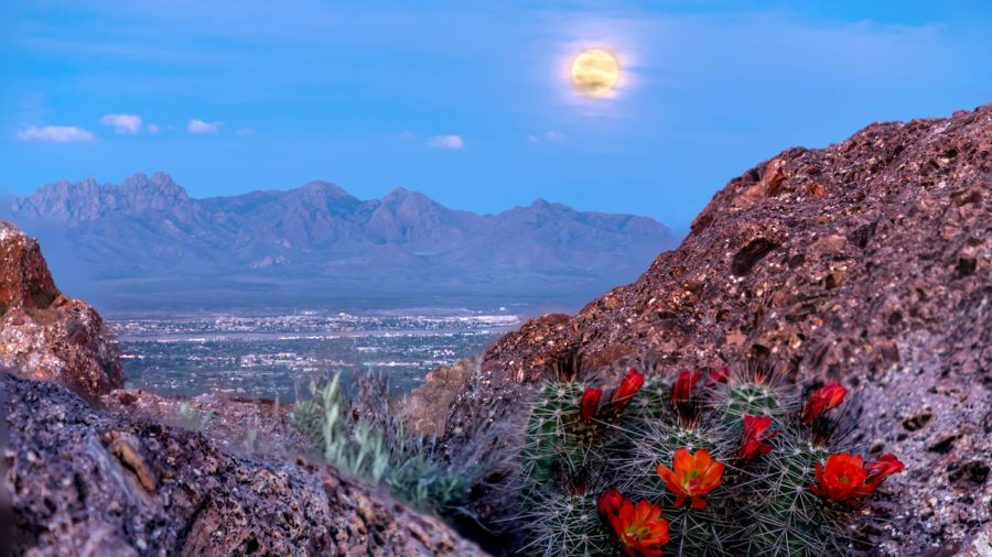Read more about the article Las Cruces 2021 Voter information