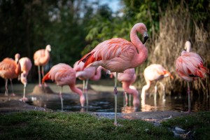 ENTER to WIN: ABQ BioPark Virtual Run for the Zoo Video Giveaway