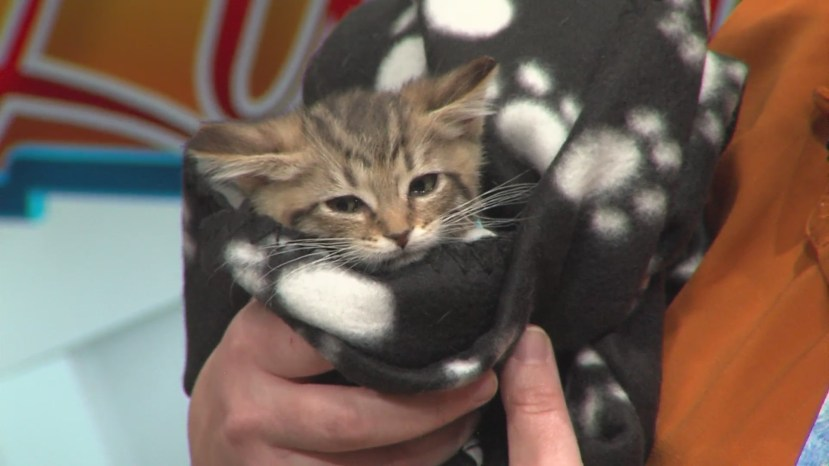 Albuquerque Animal Welfare in need of Foster Parents for special-need pets