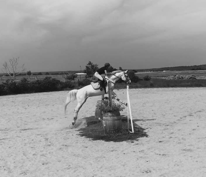 nmv-horses-alargar-tranco-salto