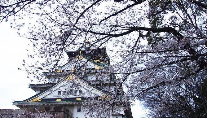 大阪城天守閣と桜